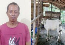 Pelaku curi sapi di Banjar Margo berinisial SN als BR (43), yang berhasil ditangkap Polisi Tulang Bawang